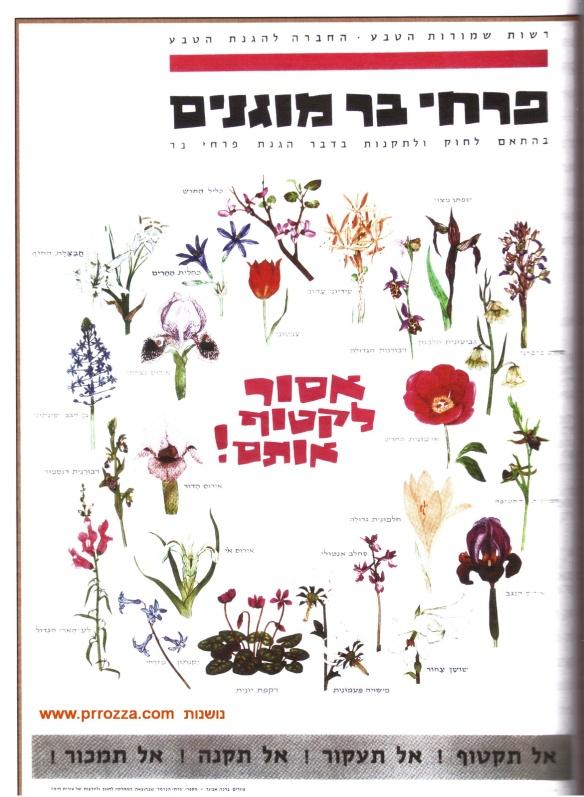 avigad-book-5-s