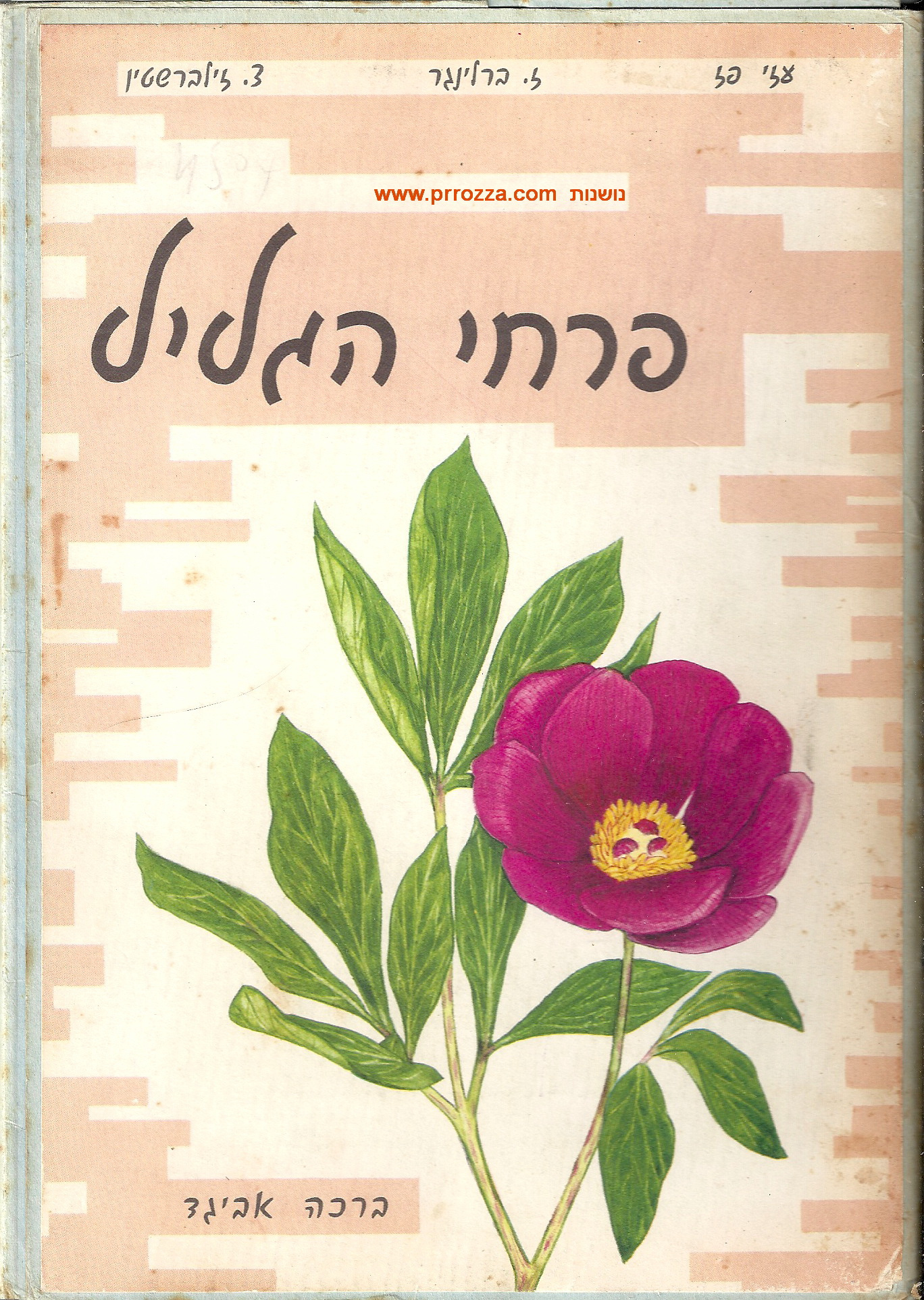 avigad-galil-cover0001-txt