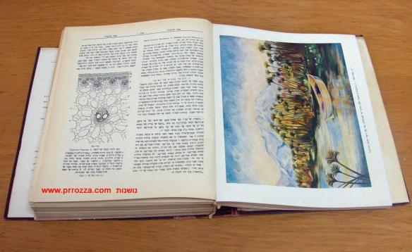 book_1421-s