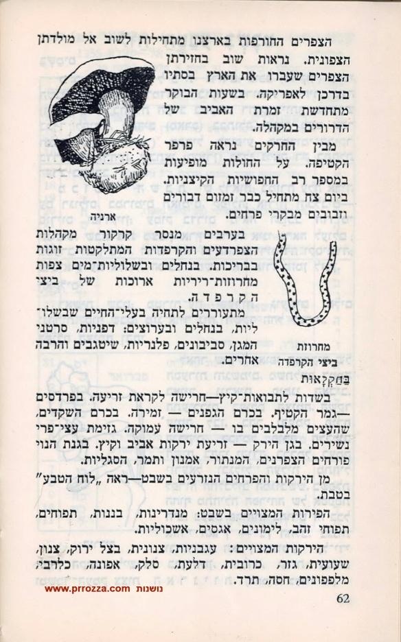 shvat-2-s